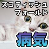 スコティッシュフォールドは障害を持ったかわいそうな猫?病気「骨瘤(骨軟骨異形成症)」について