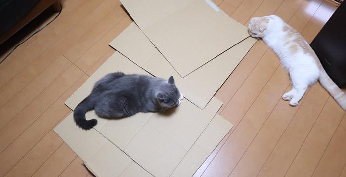 猫の手作り爪とぎの素材ダンボール