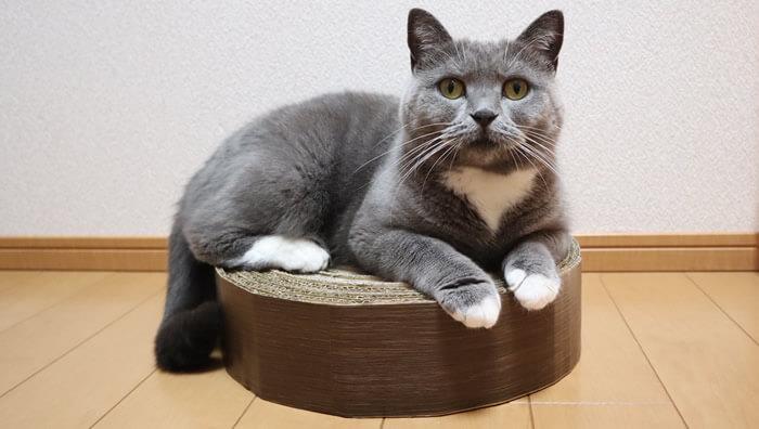 猫の爪とぎをリメイクシートでカスタム